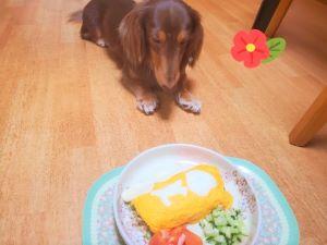 犬用オムライスと愛犬