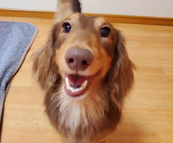 愛犬の嬉しそうな笑顔
